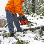 Chain Saw Debris and Storm Clean Up